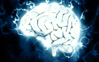 Brain Booster Day 5 – The brain as transformer
