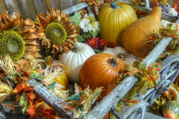 True Thanksgiving: la Puissance de la Gratitude