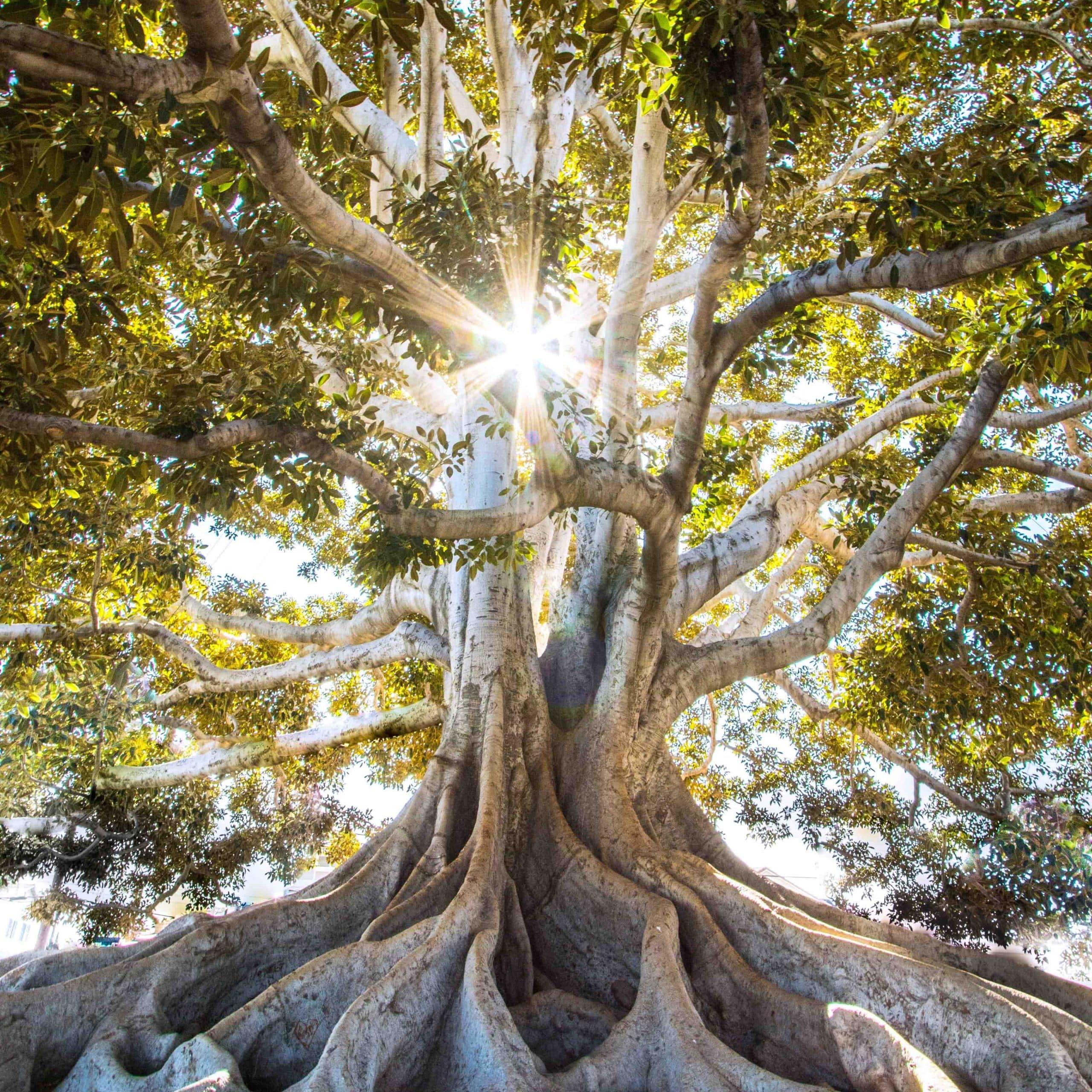 Journey of Profound Healing